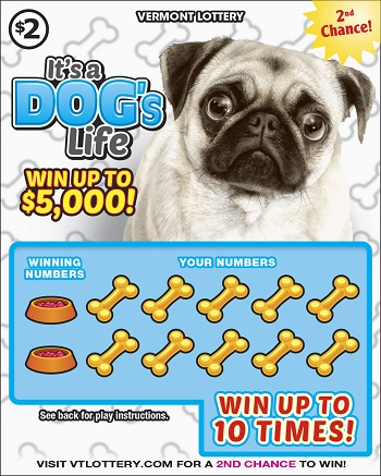 Dogs Life/Cats World